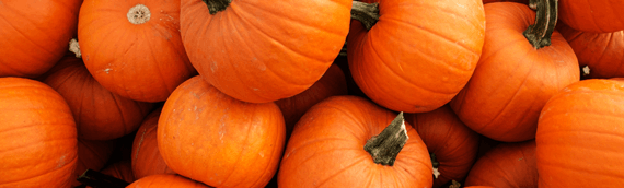 Ultimate Pumpkin Recipes for Fall